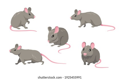 Cartoon mouse set. Grey furry rodent little rat with pink hairless tail walking or sitting isolated on white. Vector illustration for pet, animal, wildlife concept