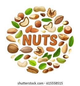 Cartoon nuts round concept with peanut almond cashew pecan hazelnut pistachio walnut pine and brazil seeds vector illustration