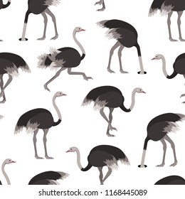 Cartoon Ostrich Gray Bird Seamless Pattern Background on a White Flat Design Style. Vector illustration of African Exotic Animal
