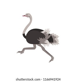 Cartoon Ostrich Gray Running Bird Flat Design Style Isolated on White Background. Vector illustration of African Exotic Animal