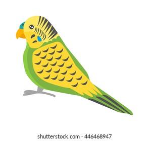 Cartoon parrots bird and parrot wild animal bird