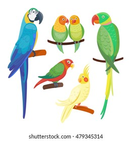 Cartoon parrots set and parrots wild animal birds