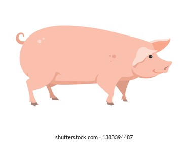 cartoon pig on white background, vector