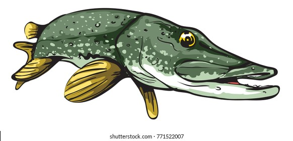 Cartoon Pike fish
