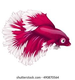 Cartoon pink betta fish, siamese fighting fish, betta splendens (Halfmoon betta) isolated on white background. Vector illustration.