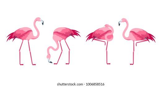 Cartoon Pink Flamingo Bird Set Tropical Wild Beautiful Exotic Symbol Flat Design Style Isolated on White Background. Vector illustration