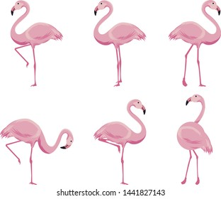 Cartoon pink flamingo vector set. Cute flamingos collection.