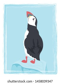 cartoon puffin color illustration, stock bird vector, poster with north bird is good for any desing