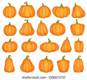 Cartoon pumpkin. Different shapes and sizes of orange gourd, agriculture harvest vegetable. Thanksgiving or halloween vector decorative cute drawing decoration design