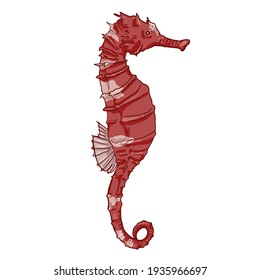 Cartoon Red Seahorse Vector Illustration