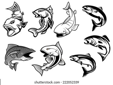 Cartoon salmons fish set for fishing sports or seafood design