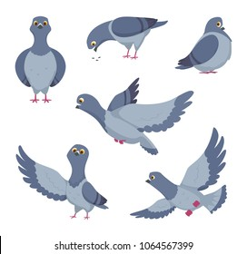 Cartoon set of funny pigeons. Illustrations of birds. Vector pigeon freedom drawing collection