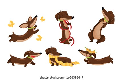 Cartoon Short-legged Dachshund Character with Long Body Catching Butterflies and Carrying Scarf Vector Set