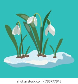 Cartoon snowdrop. Illustration of a spring flower. Drawing for children.