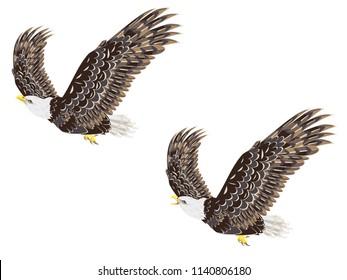 Cartoon stylized bald eagle decorative design illustration.