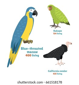 Cartoon tropical parrot wild animal bird vector illustration wildlife kakapo endangered species zoo condor color nature vivid.