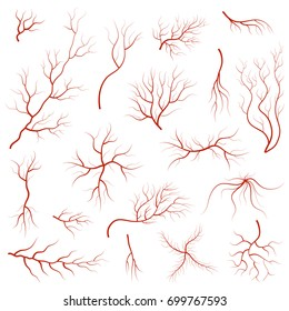 Cartoon Vein Blood Set Concept Human Anatomy Element for Science Flat Style Design. Vector illustration of Veins