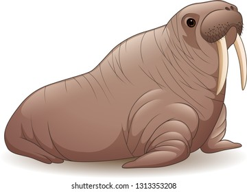 Cartoon walrus isolated on white background
