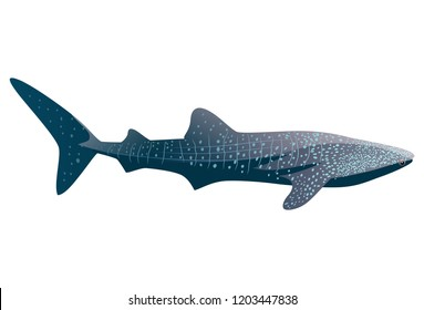 Cartoon whale shark isolated on white background. Vector illustration