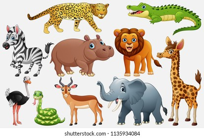 Cartoon wild animals on white background