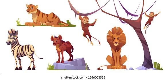 Cartoon wild animals tiger, monkeys, hyena, zebra and lion with ape. Jungle inhabitants predators and herbivorous in zoo park or safari outdoor area. Beasts in fauna, isolated vector illustrations set