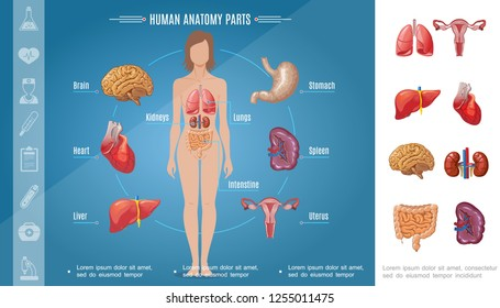 human body organs images stock photos vectors. Black Bedroom Furniture Sets. Home Design Ideas