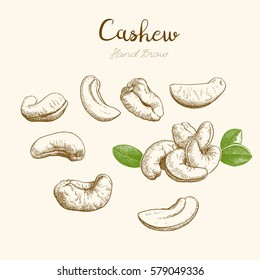 Cashew. Hand-drawn sketch