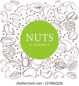 Cashew, hazelnut, walnut, pistachio, pecan nuts. Nuts sketches . Design elements for menu, banner, flyer. Vector illustration