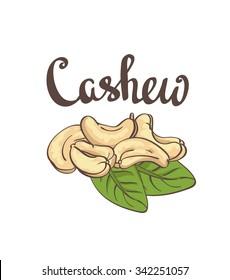 Cashew, kernels and leaves. Vector illustration