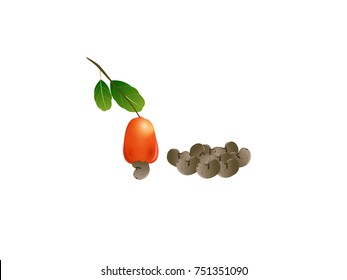 Cashew Nut Dry Fruit vector