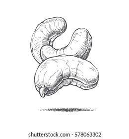 cashew nut illustration by hand pozeznaya food, retro style, vector image