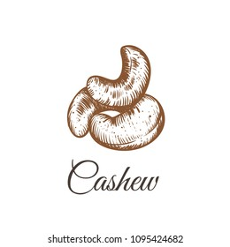Cashew nut walnut. Cashew hand drawing vector illustration