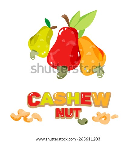 Cashew nuts fruit abnd seed with typographic design - vector illustration