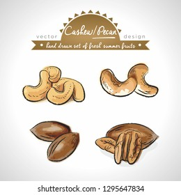 Cashew, pecan Collection of fresh fruits with leaf. Vector illustration. Isolated