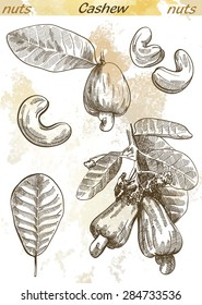 cashew set of vector sketches on an abstract background
