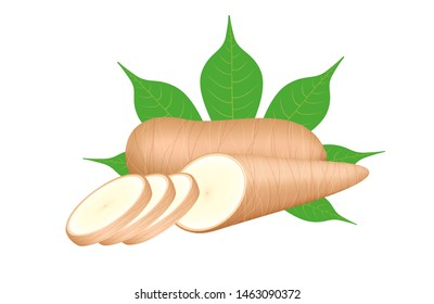 cassava fresh and leaf isolated on white background, raw cassava cut slice for tapioca flour industry or ethanol industry, pile yucca cassava tuber, raw manioc cassava in top view