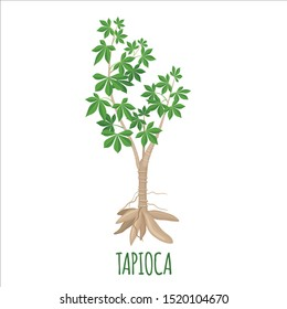 Cassava plant icon in flat style isolated on white background. Vector illustration.