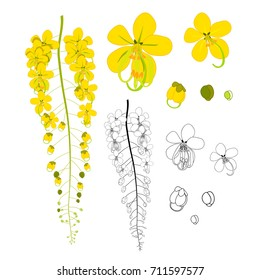 Cassia Fistula - Golden Shower Flower isolated on White Background. Vector Illustration.