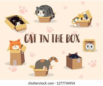cat in the box set 08