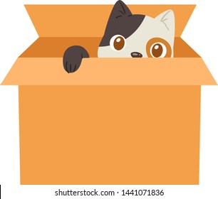 Cat in box vector kitty pet character domestic animal kitten in boxed gift illustration feline set of pussycat hidding in package isolated on white background