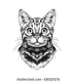 cat breed Bengal spotted striped head symmetrical sketch vector graphics black and white drawing