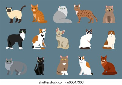 Cat breed cute pet portrait fluffy young adorable cartoon animal and pretty fun play feline sitting mammal domestic kitty vector illustration.