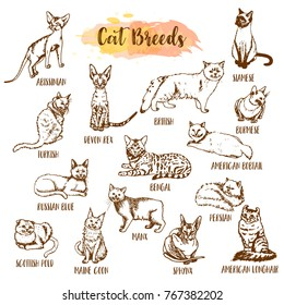 Cat breed and vet care icon set. Hand drawn cats types. Sketch of kitten. Maine coon, manx, siamese and othe breeds. Vector illustration