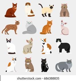 Cat breeds cute pet animal set vector illustration animals icons cartoon different cats