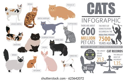 Cat breeds infographic template, icon isolated on white. Vector illustration