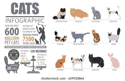 cat-breeds-infographic-template-icon-260