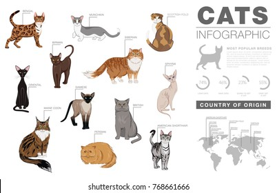Cat breeds infographic template, vector icons