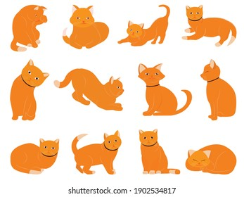 A cat built with different poses and emotions. Cat behavior, body language and facial expressions.İllustrarion, vector, desigin.