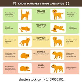 Cat and dog body language comparison, educational infographic chart. Feline and canine emotions and behavior. Cute cartoon vector illustration, printable poster.