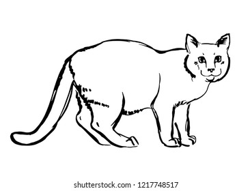 Cat drawing. Vector sketch, Black and white doodle for your design, poster.
